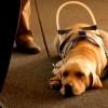 Alberghi off-limits per i cani guida: FISH scrive a Franceschini
